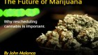 The Future of Marijuana