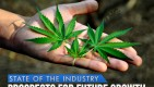 Future Marijuana Industry Growth